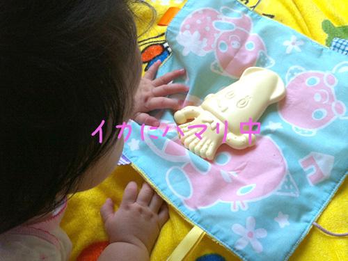 イカにハマリ中 – うちの子がハマった「イカ」【0歳時のおもちゃ】